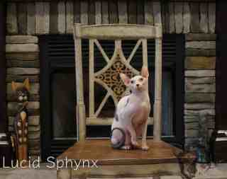 Lucid Sphynx