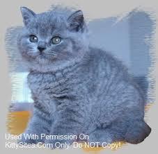 SilverBrook Cats