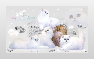 TinyPersians