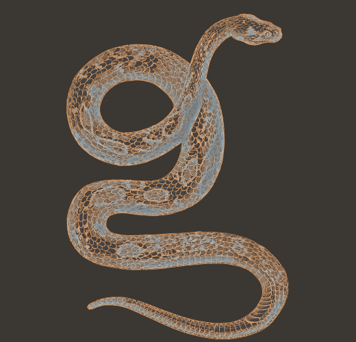 Eclipse Snake | China Rose