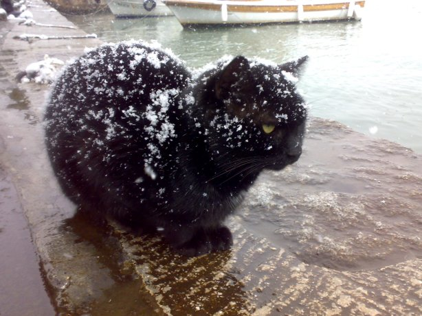 Black_cat_being_snowed_on