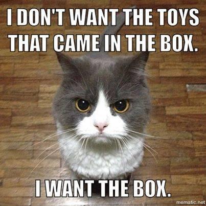 CatWantsBox
