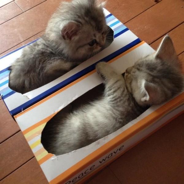 KittenTissues
