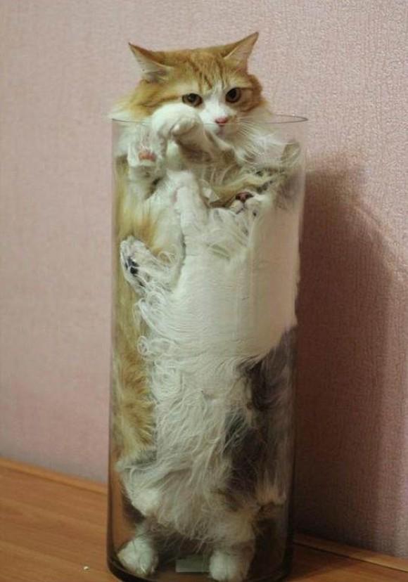 KittiesInaVase
