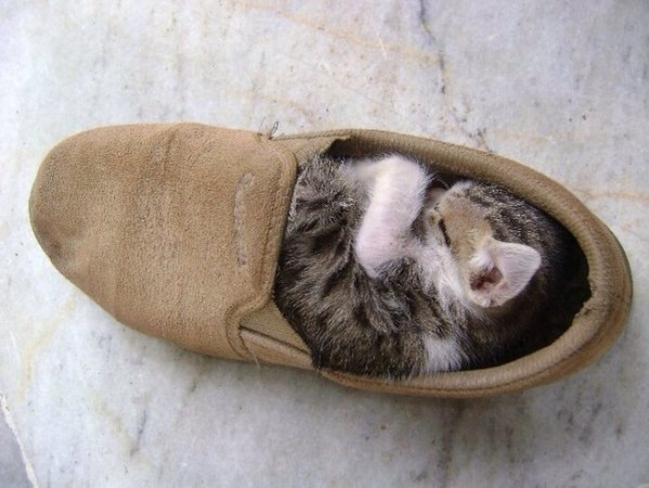 KittySlipper