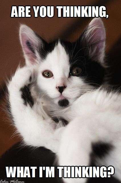 I'm Thinking Of You Meme : thinking, Thinking, Thinking?, Kittyworks