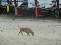 Social dog greeting beach wanderers