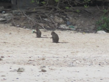 Monkies have been found!