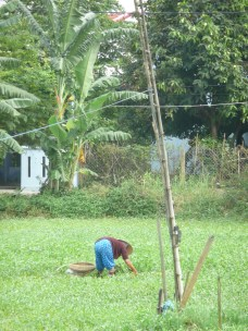 Woman working in the field
