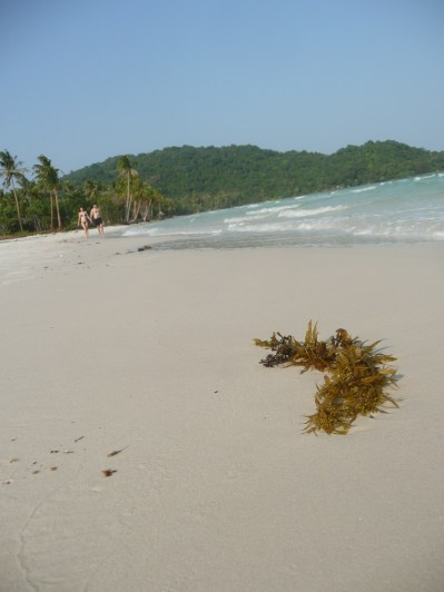 View down the beach