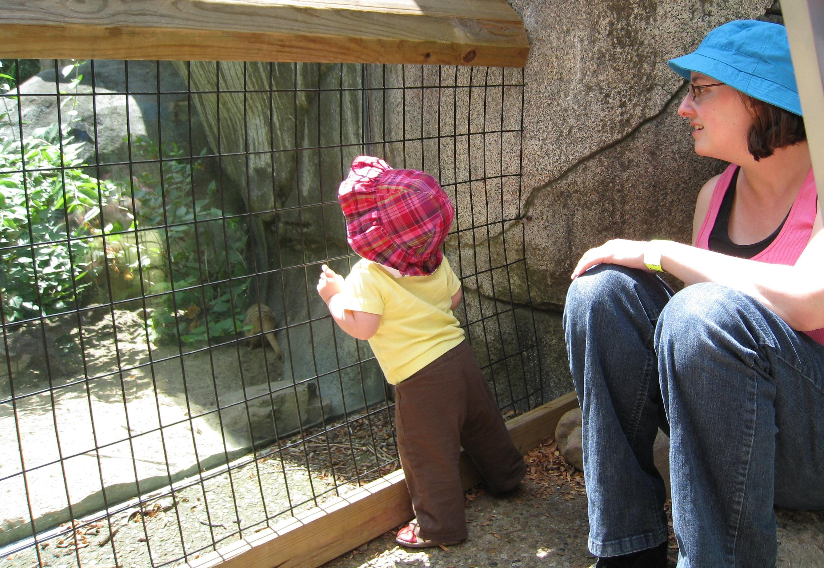 meekats and kivrin