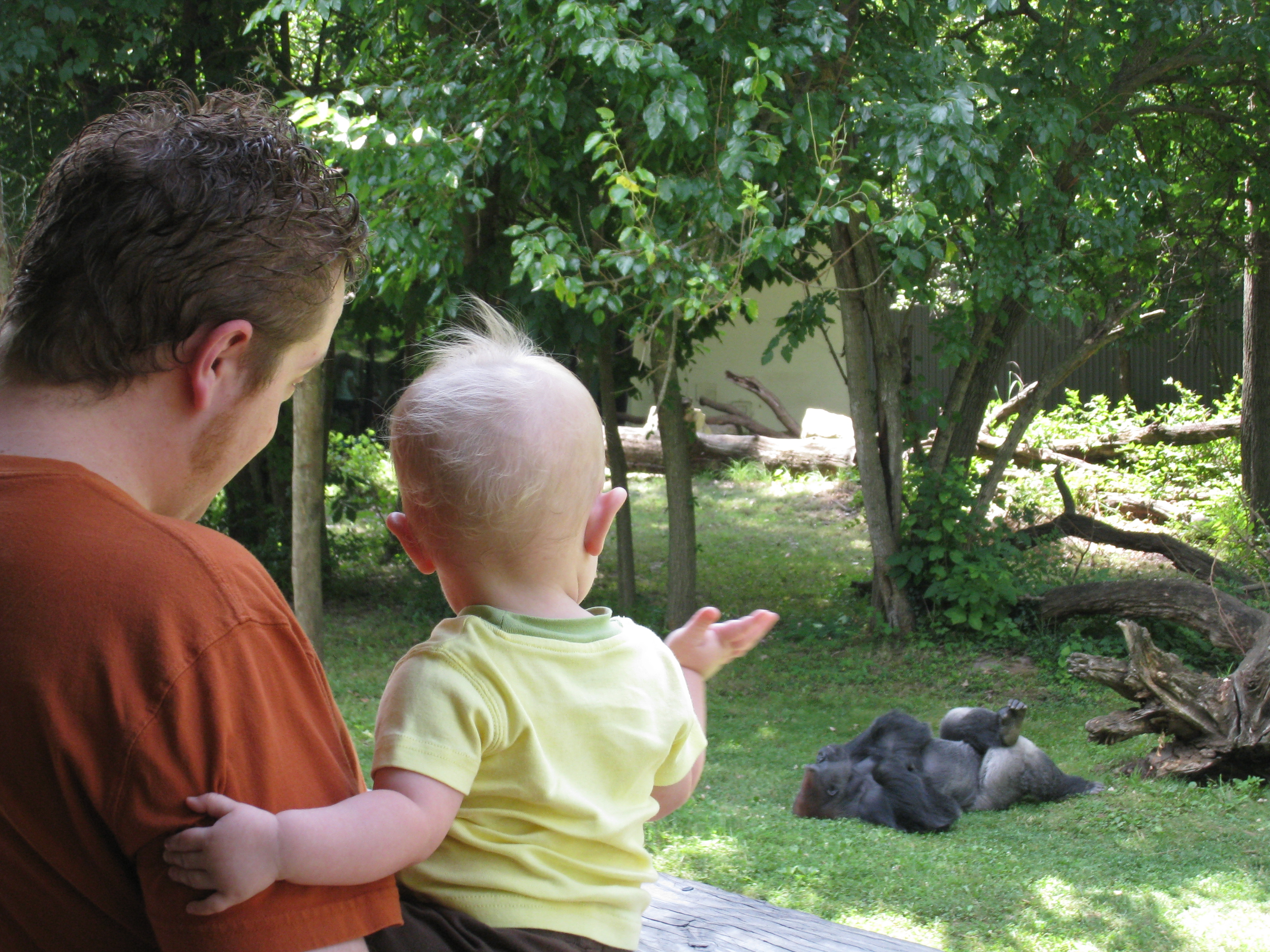 waving to the gorilla