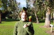 Papoušci útočí
