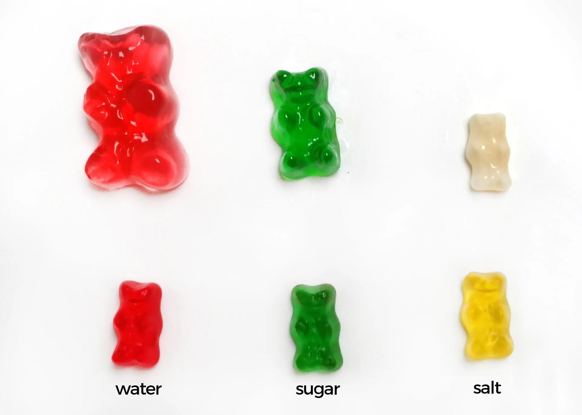 Gummy Bear Science Project
