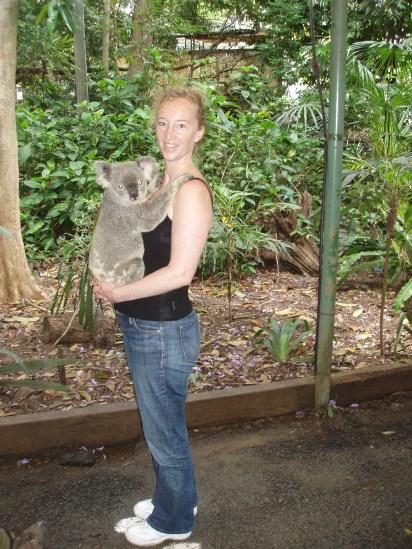 Koala cuddling