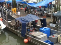 First day of selling sockeye salmon to the public