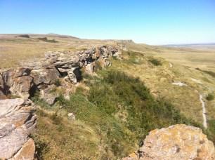Where the buffalo fell to their death