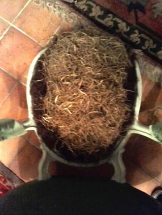 Pose du rembourrage en crin végétal