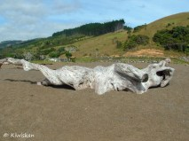 driftwood shape