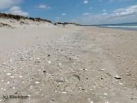 endless beachcombing
