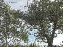 wednesday trees