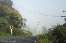 morning mist summer