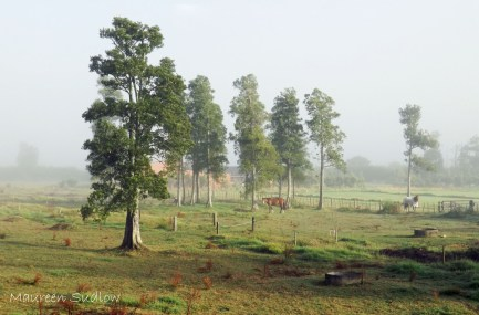 morning mist summer3