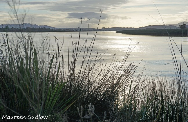river morning2