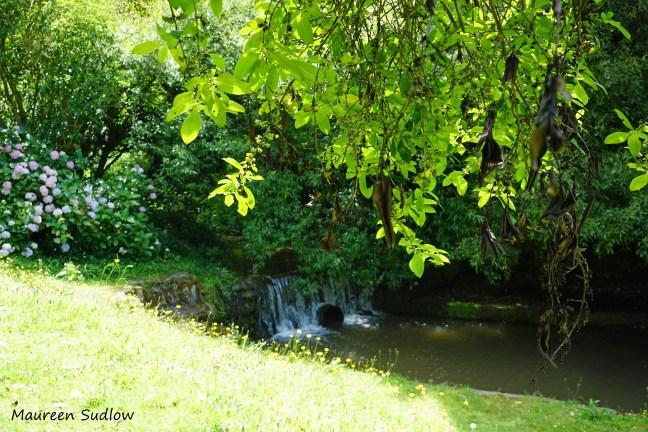 birch-pool