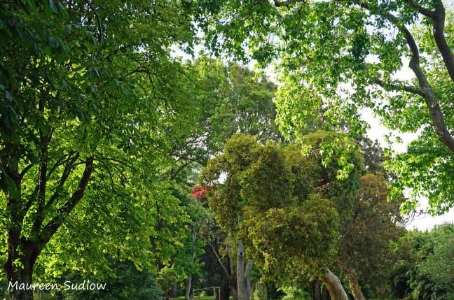 sunlit-trees