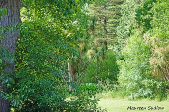 trees5a