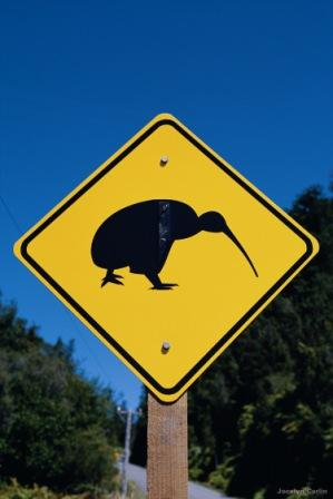 watch out for our nocturnal, flightless kiwi