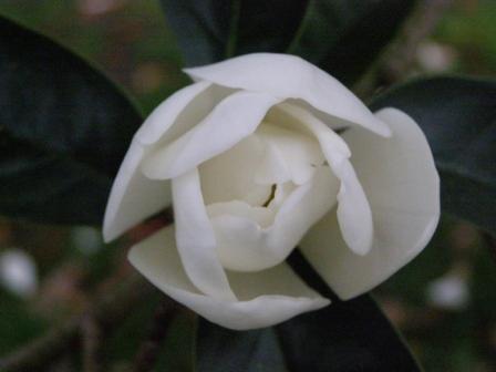 web white flower