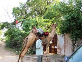 camel web 2010 781