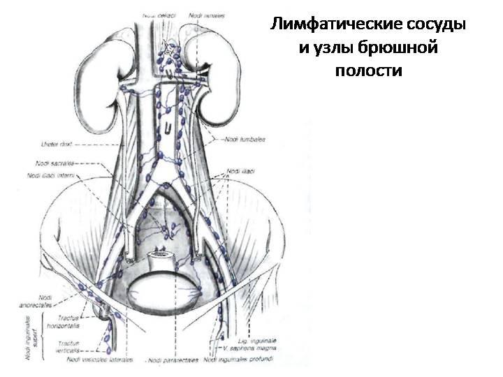 Лимфаденопатия брыжейки тонкой кишки — Про изжогу