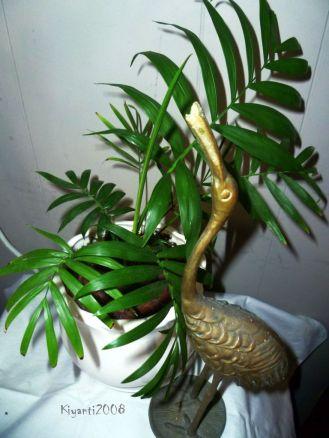 Parlour Palm - Chamaedorea Elegans