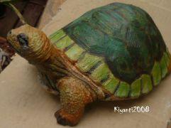 Turtle after April 16 - 2017