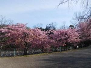 東山動植物園 春まつり 桜の回廊 02