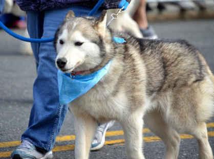 ハスキー犬