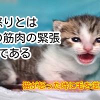 猫 威嚇 怒り 背中 筋肉 毛を逆だてる