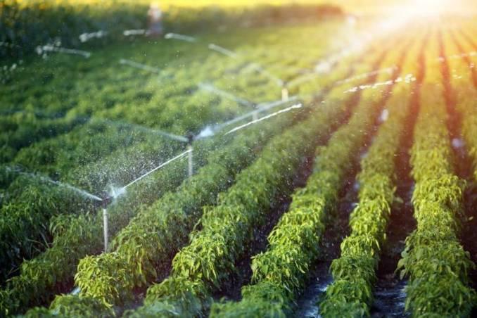 Micro Irrigation Scheme