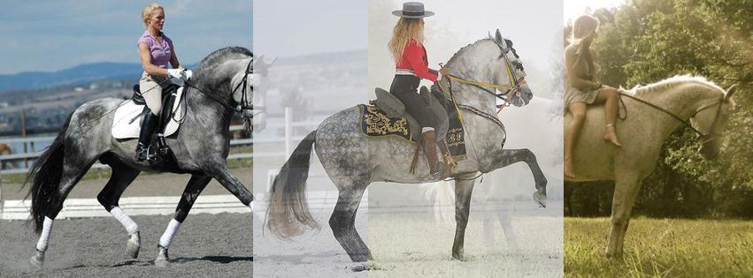 KJ Burk   Grand Prix Equestrian & Professional Trainer
