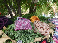 A hedge of rag rugs