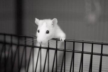Animal Testing debate