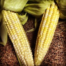 Corn coming out of ears