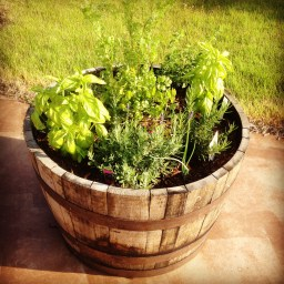 One of the herb planters