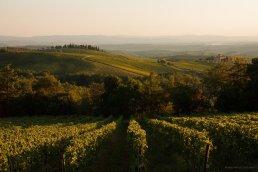 Weingut in der Nahe von Castel Nuevo Beradenga
