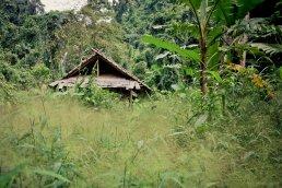 Dschungel beim Wasserfall nahe Vang Vieng