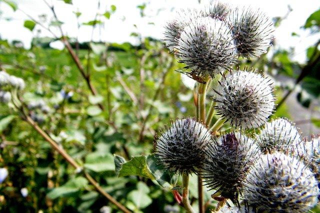 ANNUAL WEED ABATEMENT BEGINS