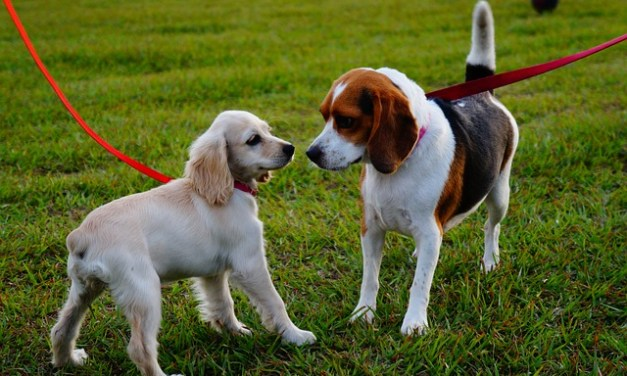 New local Dog Park – Coming Soon